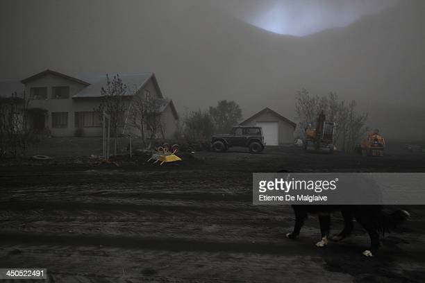 A dog watches a deserted house under a dark fallout of ashes spewed by Iceland's Eyjafjallajokull volcano that blacked out visibility under the plume...