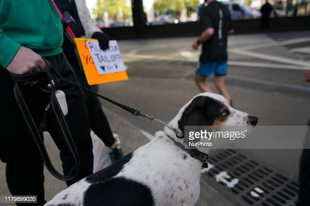 A dog watches runners at the New York City Marathon Sunday November 3rd 2019 The NYC Marathon which is the largest race in the world had over 50000...