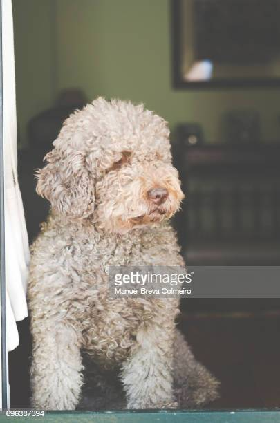 A dog watching from the door