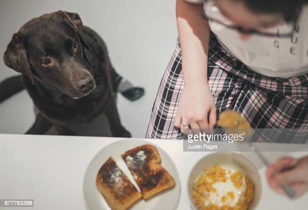 dog watching girl eat breakfast - dog eats out girl stock pictures, royalty-free photos & images
