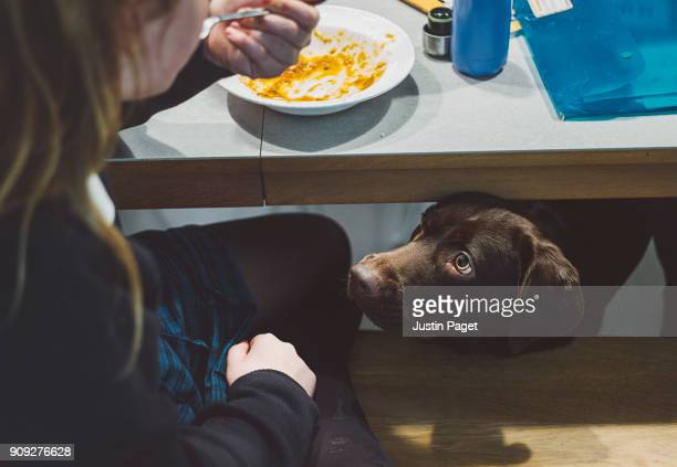 dog watching girl eating - suplicar imagens e fotografias de stock