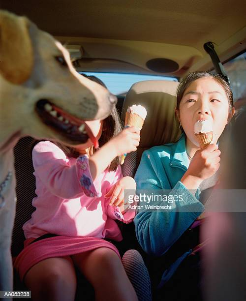 Dog watching girls (5-7) eat ice cream cones in car (selective focus)