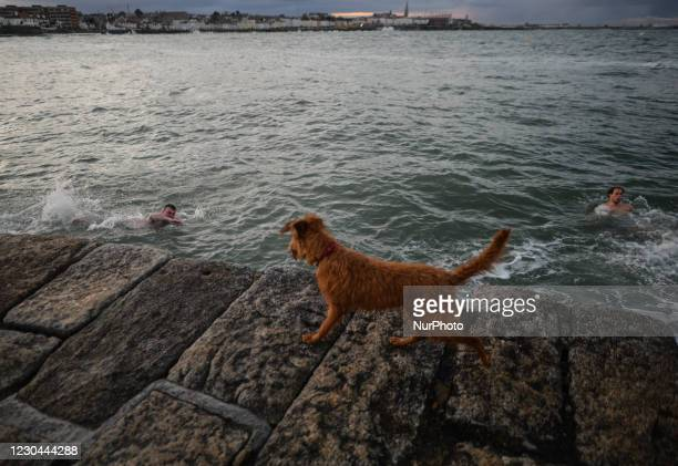 Dog watching his owner swimming in the sea at Sandycove Beach during COVID-19 level 5 lockdown. The Department of Health reported today 5,325 new...