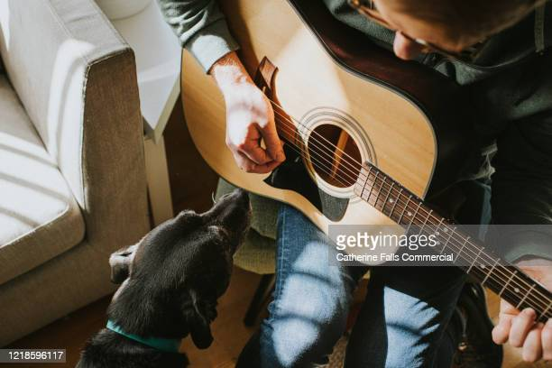 dog watching man play guitar - songwriter stock pictures, royalty-free photos & images