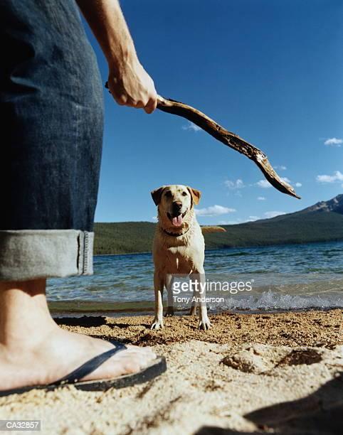 Dog watching man with stick by lake