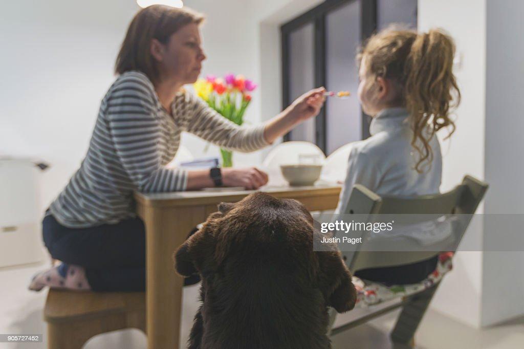 Dog watching mother feeding daughter : Stock Photo