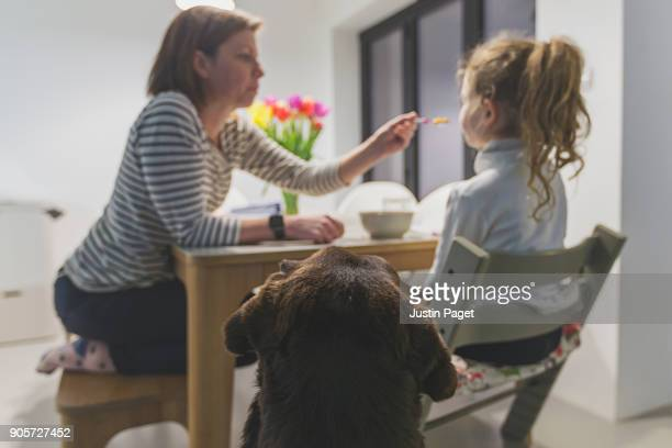 dog watching mother feeding daughter - dog eats out girl stock photos and pictures