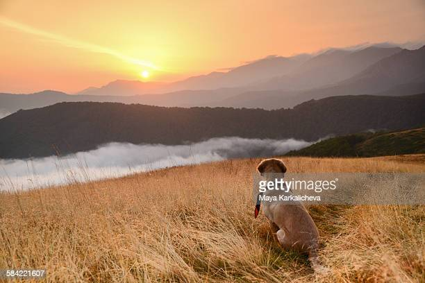 Dog watching sunrise in a mountain