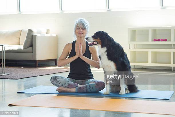 Dog watching woman doing yoga