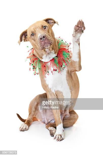 Dog waving paw