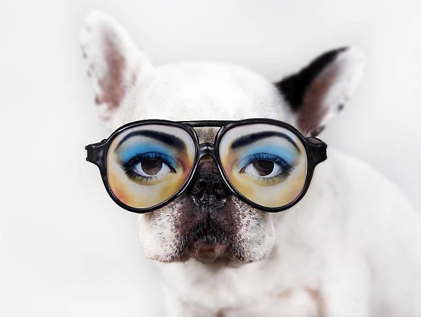 Dog wear glasses