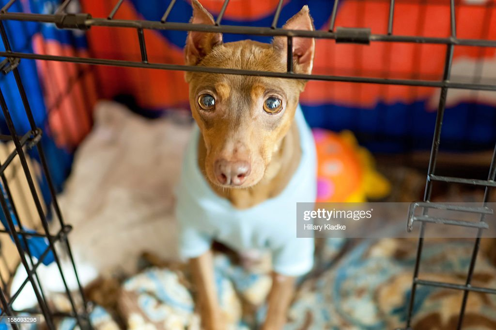 Dog wearing a blue sweater : Stock Photo