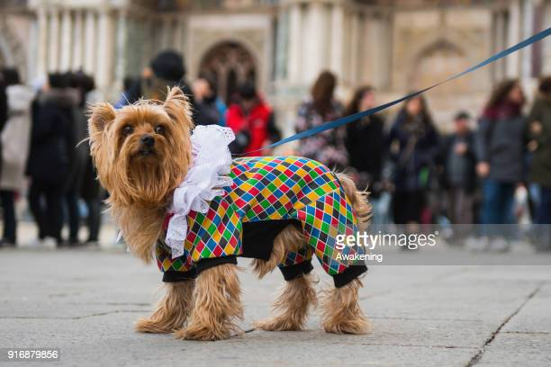 Dog wearing a carnival costume attends the event of the Eagle Flight on February 11, 2018 in Venice, Italy. The theme for the 2018 edition of Venice...