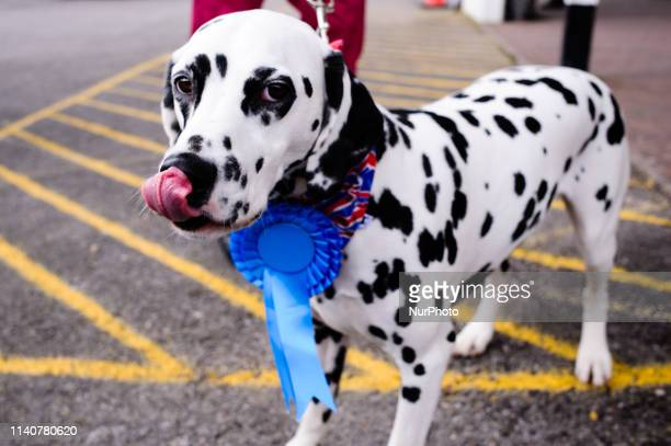 A dog wearing a Conservative Party rosette stands outside a polling station in the New Forest District Council town of New Milton in Hampshire...