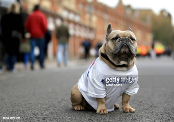 A dog wearing a England shirt is seen outside the stadium prior to the Premier League match between Fulham FC and AFC Bournemouth at Craven Cottage...