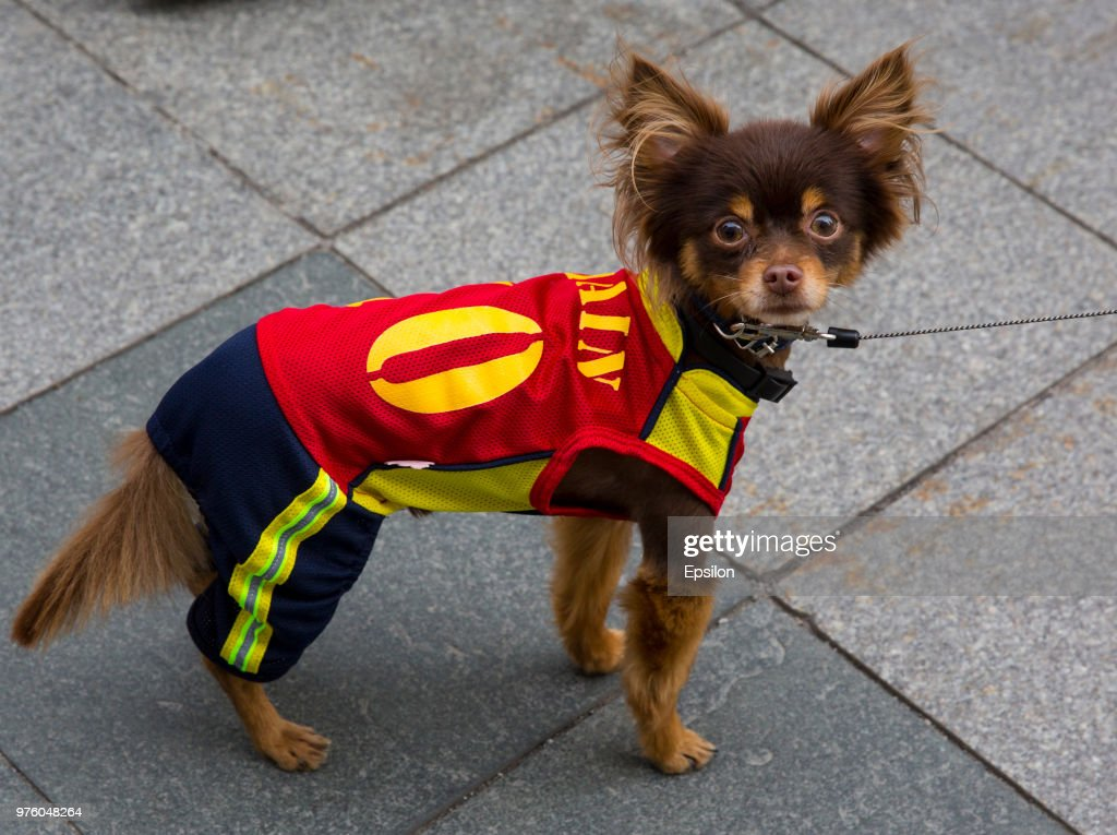 A dog wearing a football jersey cheer at Moscow downtown on June 14, 2018 in Moscow, Russia.