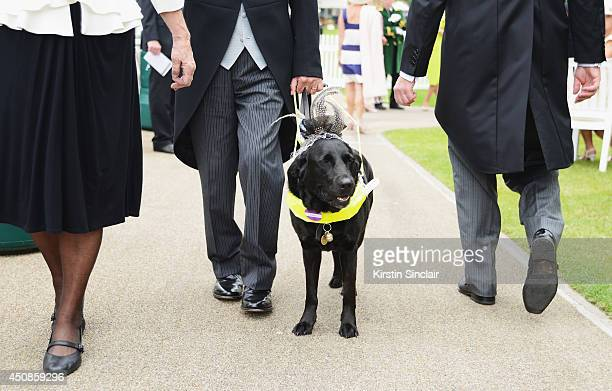 A dog wearing a hat attends day three of Royal Ascot at Ascot Racecourse on June 19 2014 in Ascot England