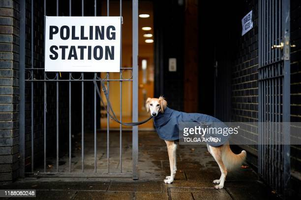 TOPSHOT A dog wearing a raincoat waits for its owner to return outside a polling station in north London as Britain holds a general election on...