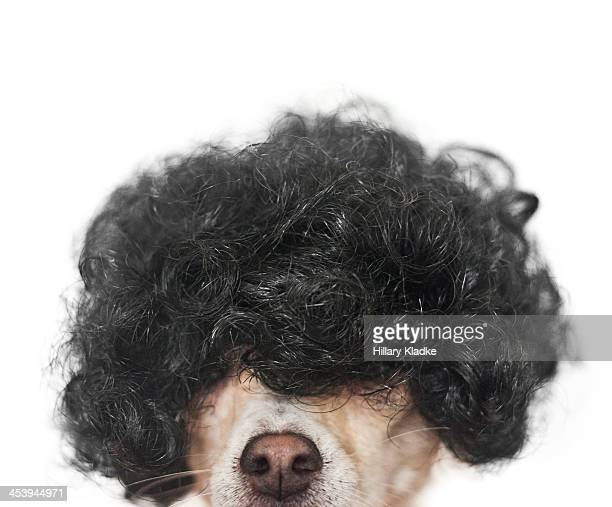 Dog wearing black wig