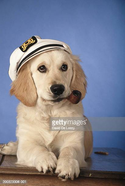 dog wearing cap, holding pipe in mouth, close-up - セーラーハット ストックフォトと画像