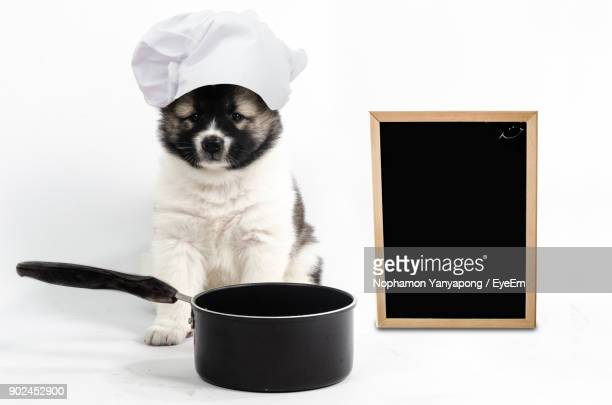 Dog Wearing Chef Hat With Kitchen Utensil And Blackboard Over White Background