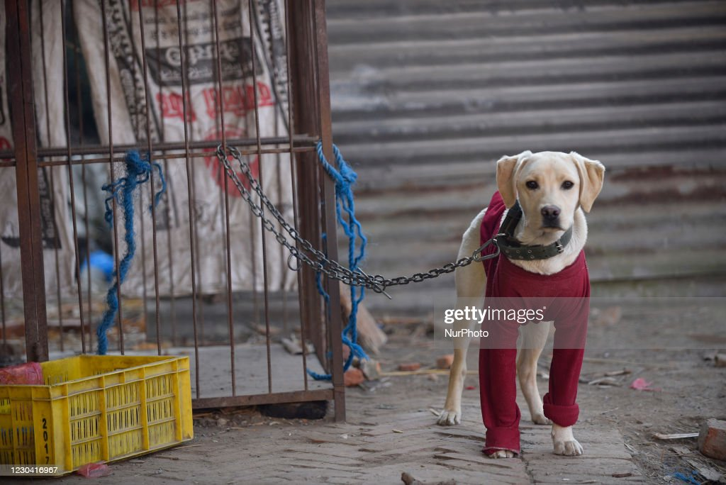 Animals In Nepal : News Photo