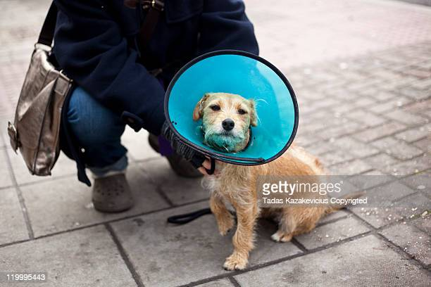 dog wearing cone - protective collar stock pictures, royalty-free photos & images