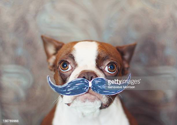 Dog wearing fake mustache