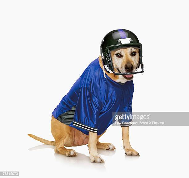 Dog wearing football helmet and jersey