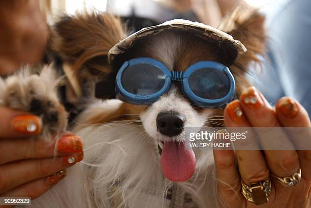 A dog wearing glasses is pictured during the Palm Dog's award ceremony on the sidelines of the 62nd Cannes Film Festival on May 22 2009 A dumb dog...