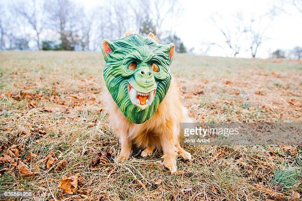 Dog Wearing Halloween Mask