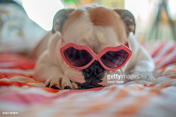 Dog wearing heart shaped glasses