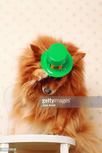 Dog Wearing Leprechaun Hat