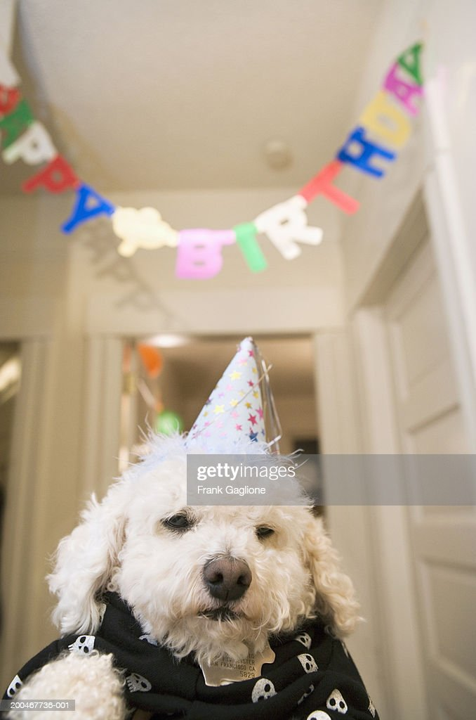 Dog Wearing Party Hat Happy Birthday Banner In Background Stock Foto