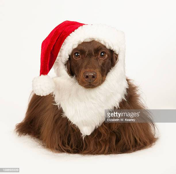 Dog wearing Santa hat and beard