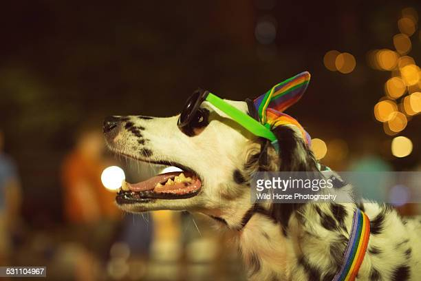 dog wearing sunglass and hat in parade