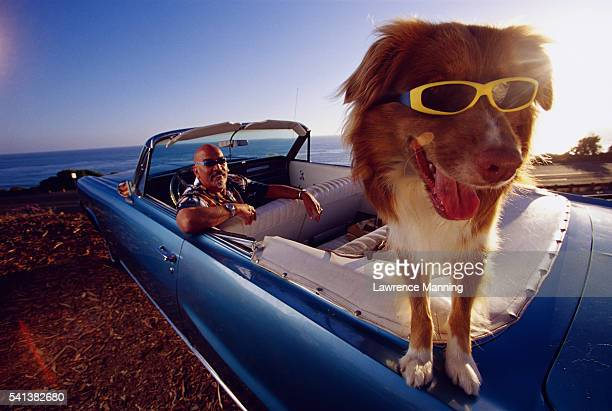 Dog Wearing Sunglasses in Convertible Car
