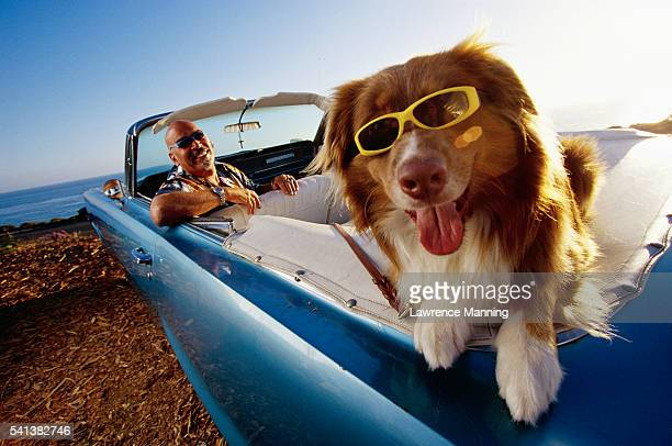 Dog Wearing Sunglasses in Convertible