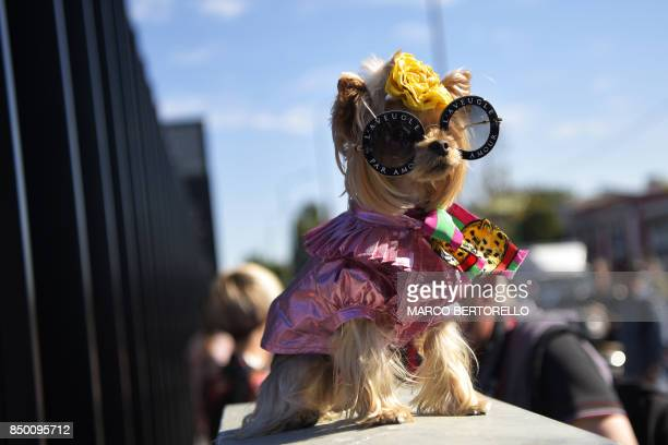 A dog wearing sunglasses is pictured outside the show for fashion house Gucci during the Men and Women's Spring/Summer 2018 fashion shows in Milan on...