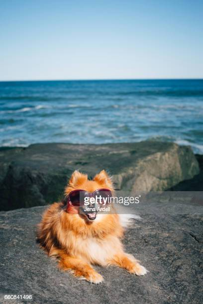 Dog Wearing Sunglasses On Beach