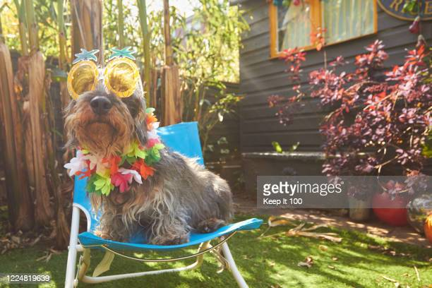 dog wearing sunglasses - sunglasses stock pictures, royalty-free photos & images