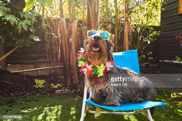 dog wearing sunglasses - vacations stock pictures, royalty-free photos & images
