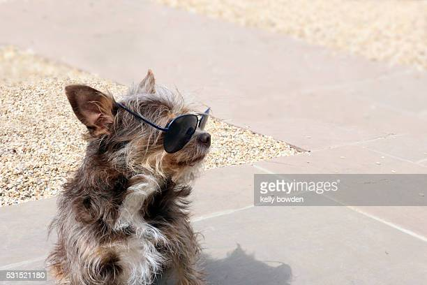 dog wearing sunglasses