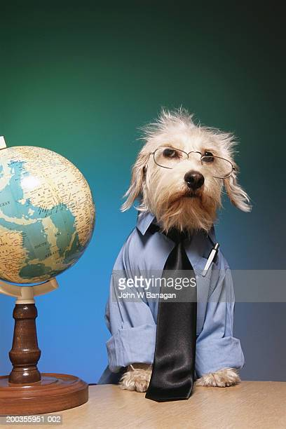 Dog wearing tie and glasses, next to globe