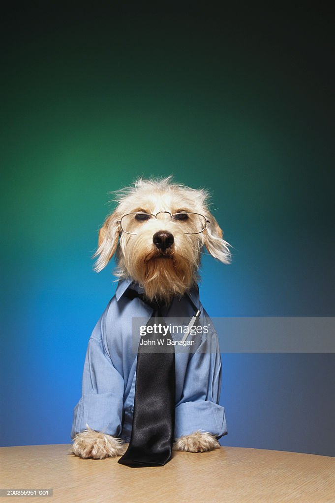 Dog wearing tie and glasses : Stock Photo