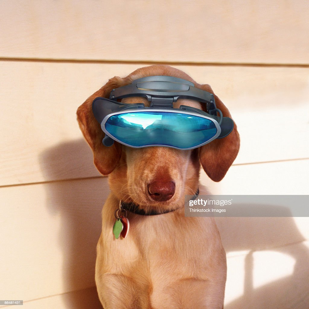 Dog wearing virtual reality goggles : Stock Photo