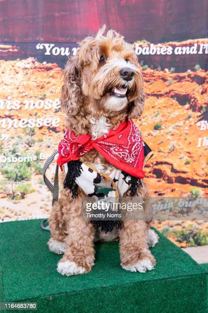 A dog wearing western wear attends a Special Sneak Peek of Ken Burns' PBS documentary series Country Music at Autry Museum of the American West on...