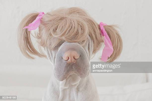 dog wearing wig with pigtails - animal body part stock pictures, royalty-free photos & images