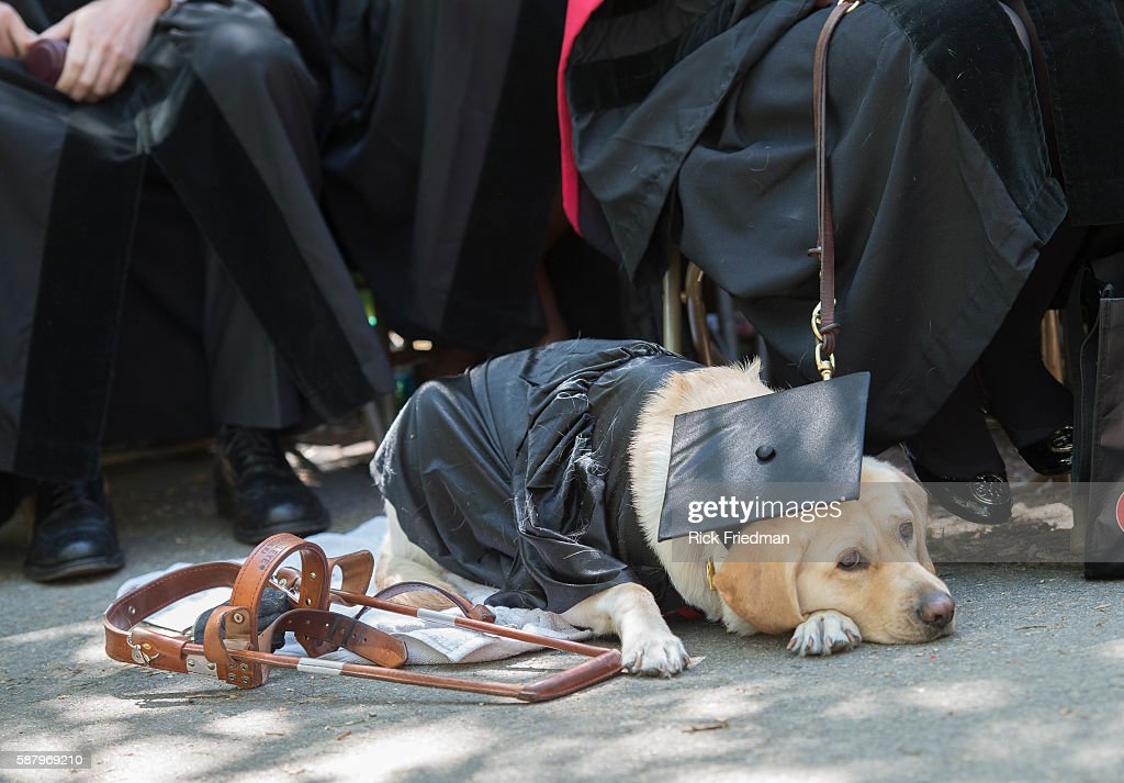 Harvard University\'s 363rd commencement ceremony Pictures | Getty Images