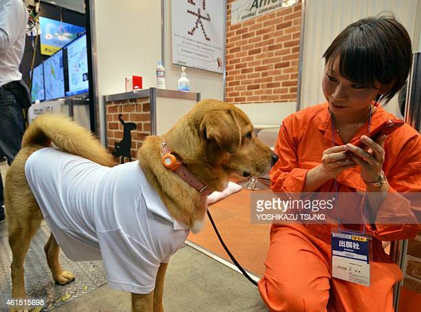 A dog wears a communication device 'Tsunagarucall' developed by Japan's electronics venture Anicall at the Wearable Device Technology Expo in Tokyo...